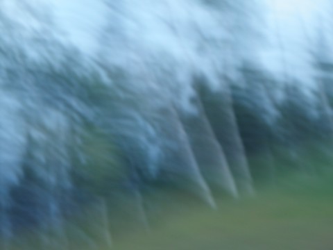 20110922214135-swayingtrees