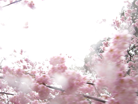 20110928101150-kano_shiho_shinonome_hi_res_0002_copy