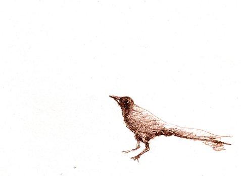 20111001031819-drawblackbird