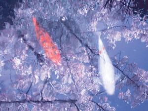 20111004014507-leilasingleton-bluehrflares