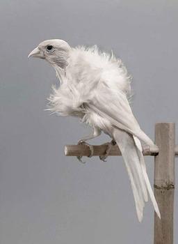 20111011091654-hoe-000-birds-06-2