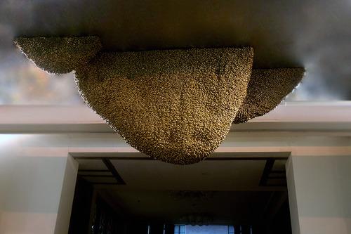 20111014082154-bee