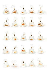 20111018035546-goldfish10001a4