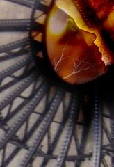 20111023124124-robin_rios