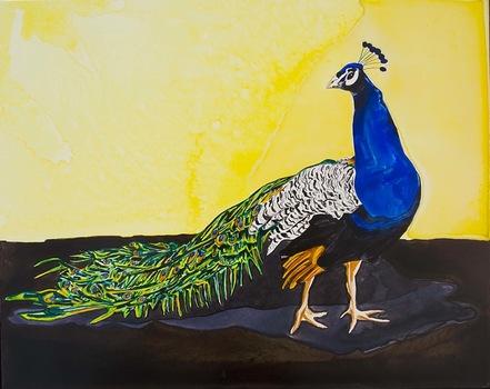20111028135751-peacock_profile