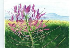 20111031173144-flowerhighrez