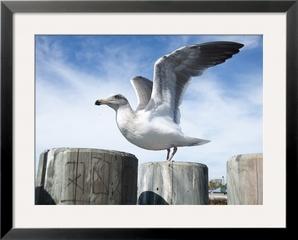 20111103053635-free_frameimage