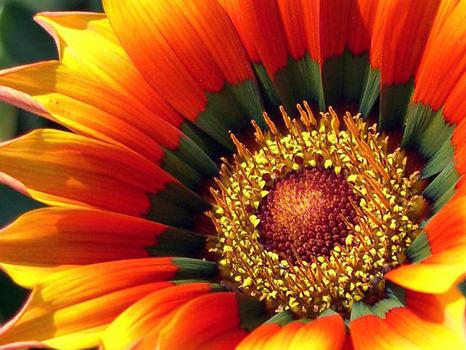 20111103234126-florencia