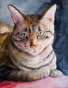20111108111852-cat