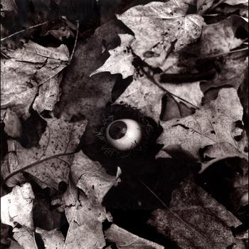 20111108152813-acorn_eye-rgb