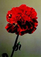 20111121083027-_thumb_yonemoto-asexual_01_jpg_600x460_upscale_q85