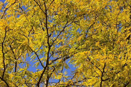 20111127114833-autumn