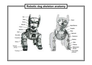 20111129234433-dog_skeleton_08