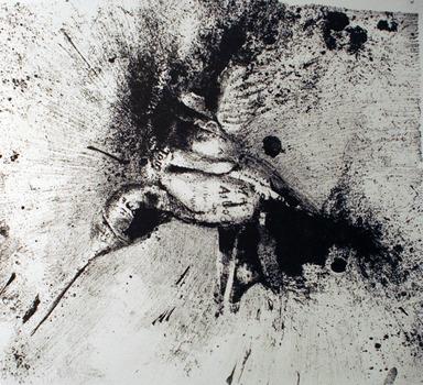 20111204171346-colibri2