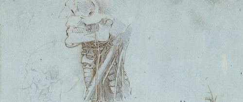 20111209012341-leonardo-anatomical-studies-neck-skull-x6859-wide-banner