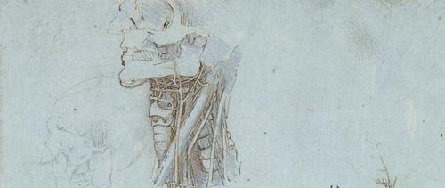20111209012341-leonardo-anatomical-studies-neck-skull-x6859-wide-banner
