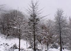20111209024417-cimg0337_crop_midt_19x27_snow_nyc_2010