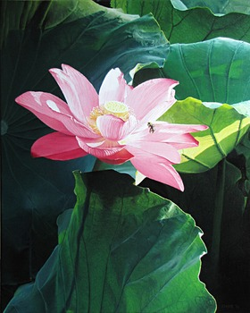 20111209201728-lotus_beesmall