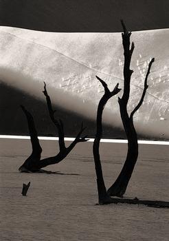 20111211010612-danse_macabreas