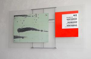 20111211110450-03eins_vertebrae
