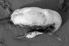 20111214105124-deadbirds1