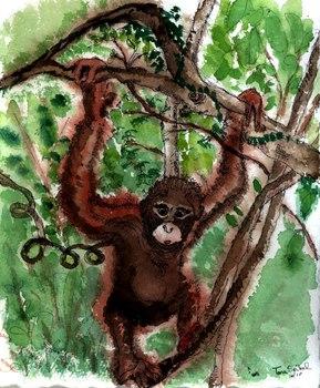 20111217232610-my_monkey