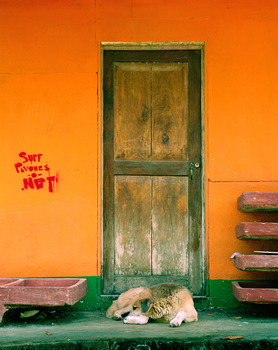 20111219080902-mayfieldlily_postcard