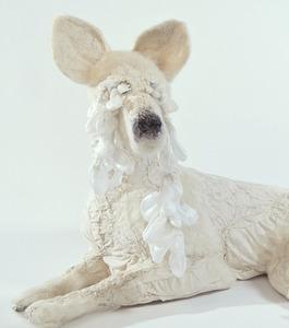 20111222132601-lying_down_dog_detail