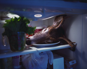 20111227162846-deer_in_fridge_send