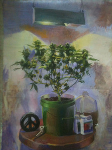 20111228014808-pot-plant