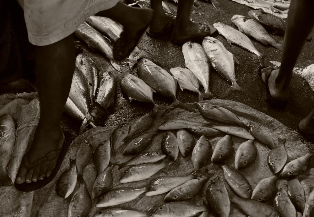 20111228205125-fishy_tales_as_mg_0490