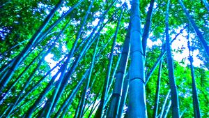 20111230191835-bamboo_dreams