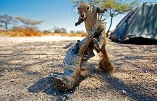 20120106165008-squirrelimgeforweb