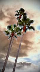 20120106232149-winter_palms_2011-09-30_14-34-47_406-2