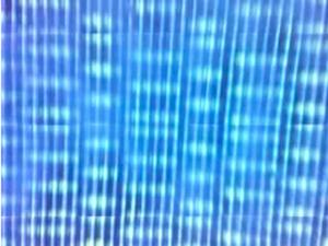 20120109170356-diatomsinblue