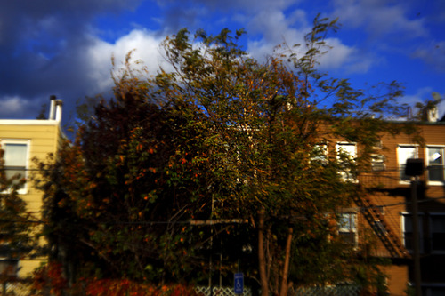20120110144842-trees_bldgs_clds