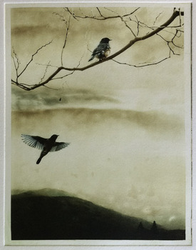 20120112052600-bluebird-song