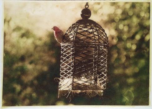 20120112053416-caged-bird-sing