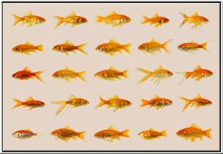 20120114202306-goldfish50001web