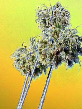 20120114223412-1_palms2010-05-2118