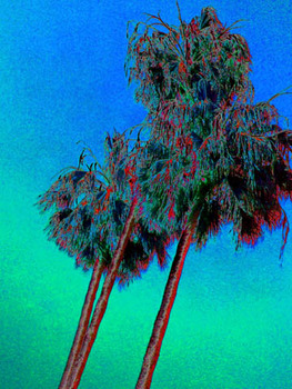 20120114225058-blue1_palms2010-05-2118