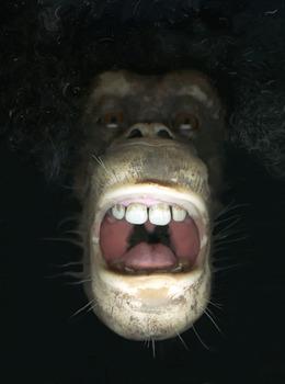 20120115223323-damm_dirty_ape