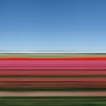 20120122095028-rob_carter_tulip_fields_holland_xiv
