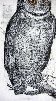 20120125061945-owl092511
