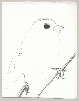 20120127110421-translucent_sparrow