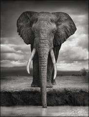 20120201181717-nb_elephantdrinking-07_forpress