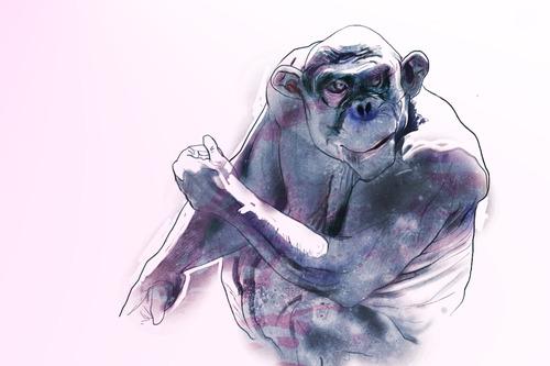 20120204024317-chimp2