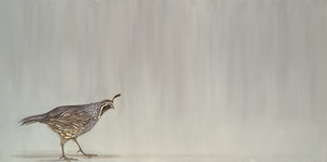 20120205025532-walking_quail_med_res