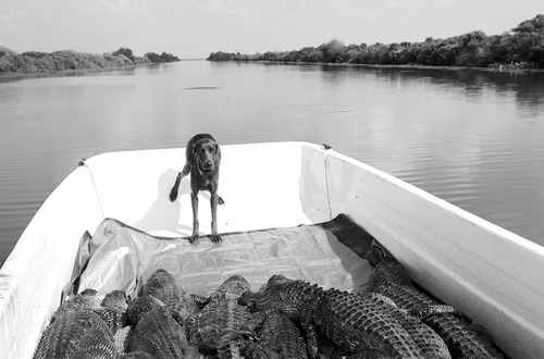 20120207165634-jade_and_the_gators_