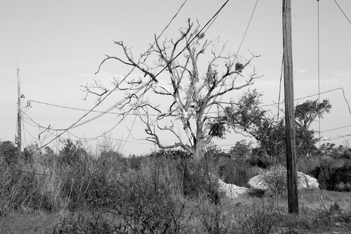 20120207170336-wire_isle_de_jean_charles_